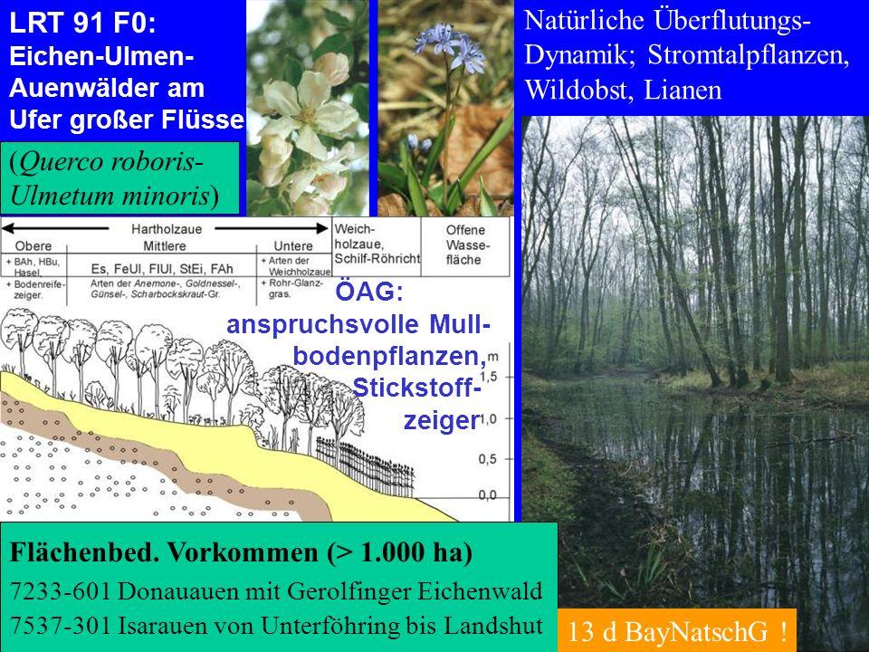 Bayerische Landesanstalt für Wald und Forstwirtschaft LRT 91 F0: Eichen-Ulmen- Auenwälder am Ufer großer Flüsse Natürliche Überflutungs- Dynamik; Stro