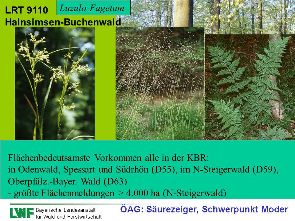 Bayerische Landesanstalt für Wald und Forstwirtschaft Weiße Hainsimse bodensauer, krautarm; keine auffälligen phäno- logischen Aspekte Draht-Schmiele
