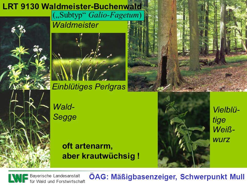 Bayerische Landesanstalt für Wald und Forstwirtschaft Waldmeister Wald- Segge Vielblü- tige Weiß- wurz Einblütiges Perlgras oft artenarm, aber krautwü