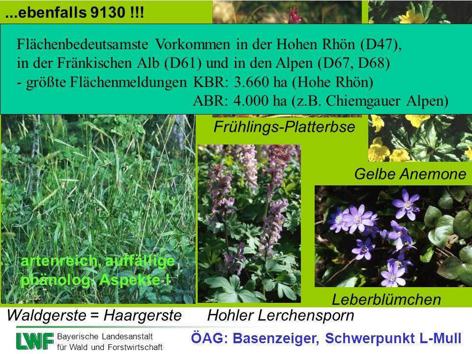 Bayerische Landesanstalt für Wald und Forstwirtschaft Frühlings-Platterbse Hohler Lerchensporn Leberblümchen Gelbe Anemone Waldgerste = Haargerste art