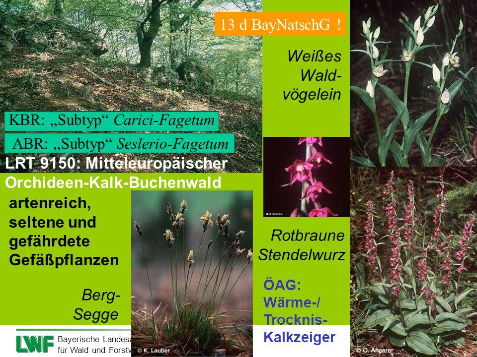 Bayerische Landesanstalt für Wald und Forstwirtschaft Berg- Segge artenreich, seltene und gefährdete Gefäßpflanzen Weißes Wald- vögelein Rotbraune Ste