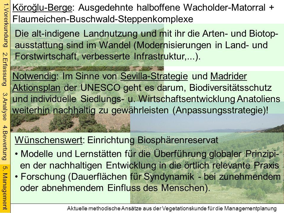 Aktuelle methodische Ansätze aus der Vegetationskunde für die Managementplanung Köroğlu-Berge: Ausgedehnte halboffene Wacholder-Matorral + Flaumeichen
