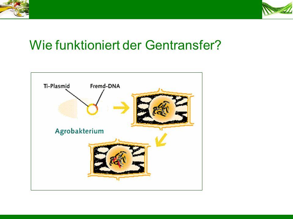 Wie funktioniert der Gentransfer?