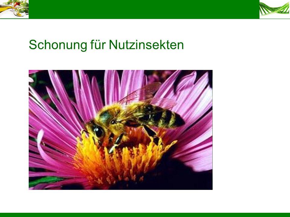 Schonung für Nutzinsekten