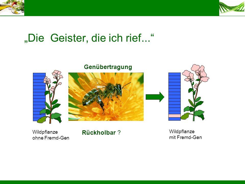 Die Geister, die ich rief... Genübertragung Wildpflanze ohne Fremd-Gen Rückholbar ? Wildpflanze mit Fremd-Gen