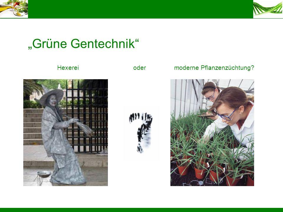 Grüne Gentechnik Hexereimoderne Pflanzenzüchtung?oder