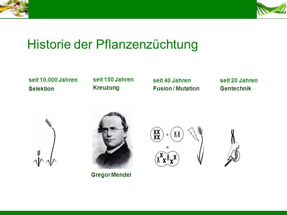 Historie der Pflanzenzüchtung seit 10.000 Jahren Selektion seit 40 Jahren Fusion / Mutation seit 20 Jahren Gentechnik seit 150 Jahren Kreuzung Gregor