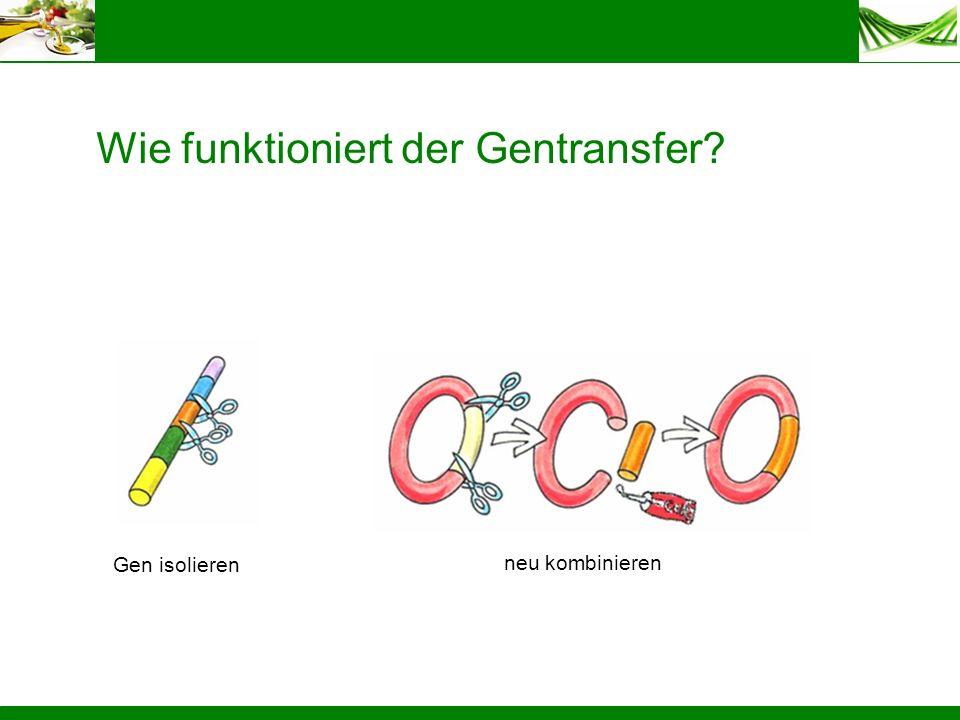 Wie funktioniert der Gentransfer? Gen isolieren neu kombinieren