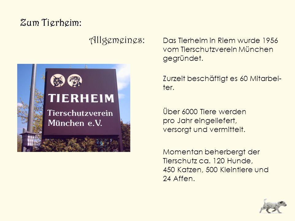 Zum Tierheim: Das Tierheim in Riem wurde 1956 vom Tierschutzverein München gegründet. Zurzeit beschäftigt es 60 Mitarbei- ter. Über 6000 Tiere werden