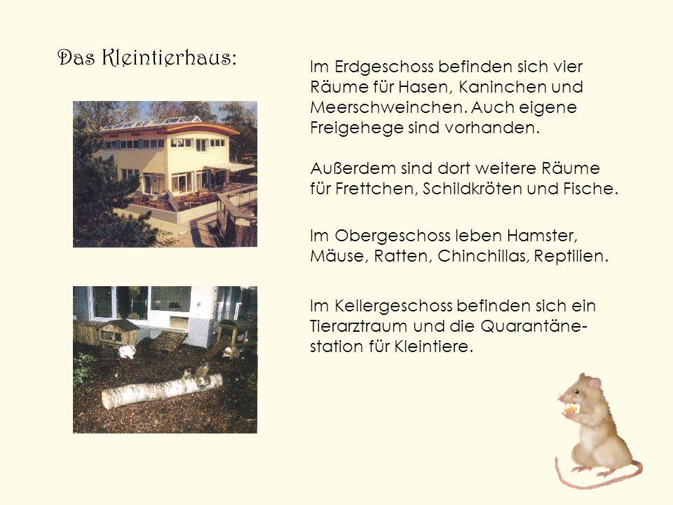 Das Kleintierhaus: Im Erdgeschoss befinden sich vier Räume für Hasen, Kaninchen und Meerschweinchen. Auch eigene Freigehege sind vorhanden. Außerdem s