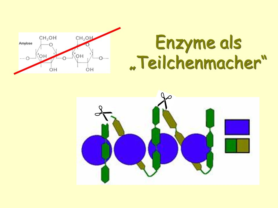 Enzyme als Teilchenmacher