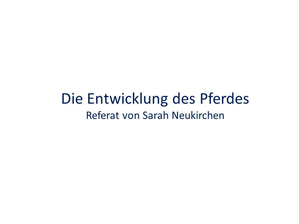 Die Entwicklung des Pferdes Referat von Sarah Neukirchen