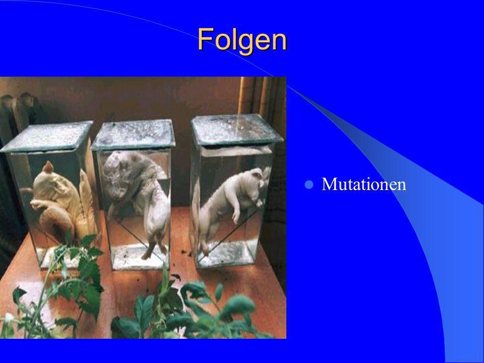 Folgen Mutationen