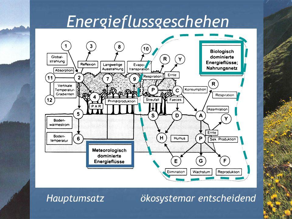Energieflussgeschehen Hauptumsatzökosystemar entscheidend