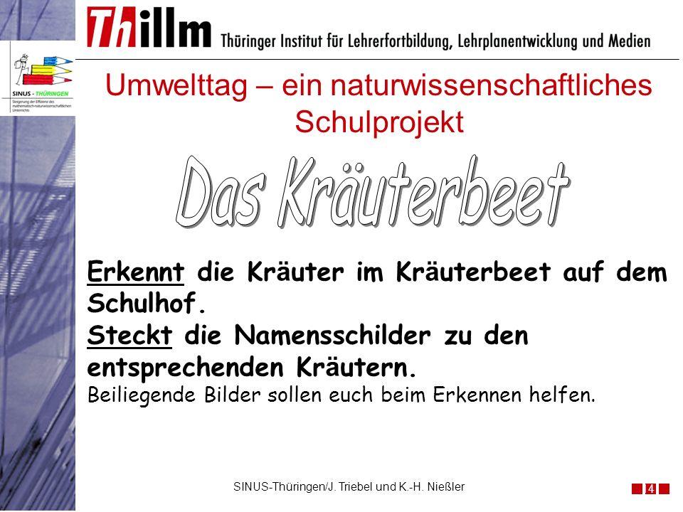 Umwelttag – ein naturwissenschaftliches Schulprojekt 14 SINUS-Thüringen/J. Triebel und K.-H. Nießler Erkennt die Kr ä uter im Kr ä uterbeet auf dem Sc