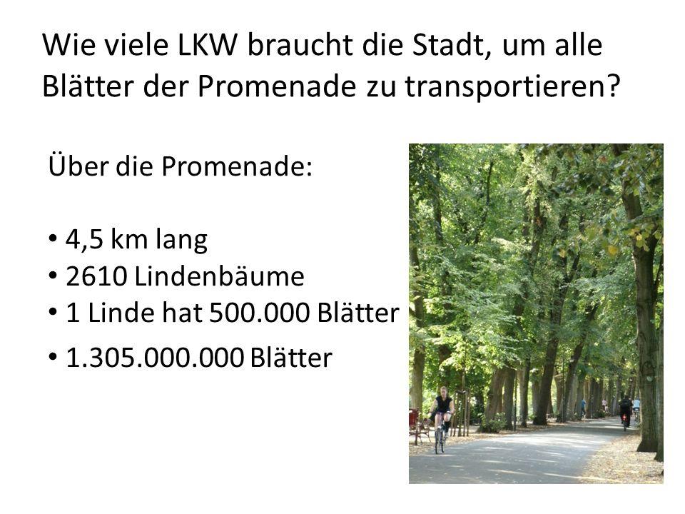 Wie viele LKW braucht die Stadt, um alle Blätter der Promenade zu transportieren? Über die Promenade: 4,5 km lang 2610 Lindenbäume 1 Linde hat 500.000