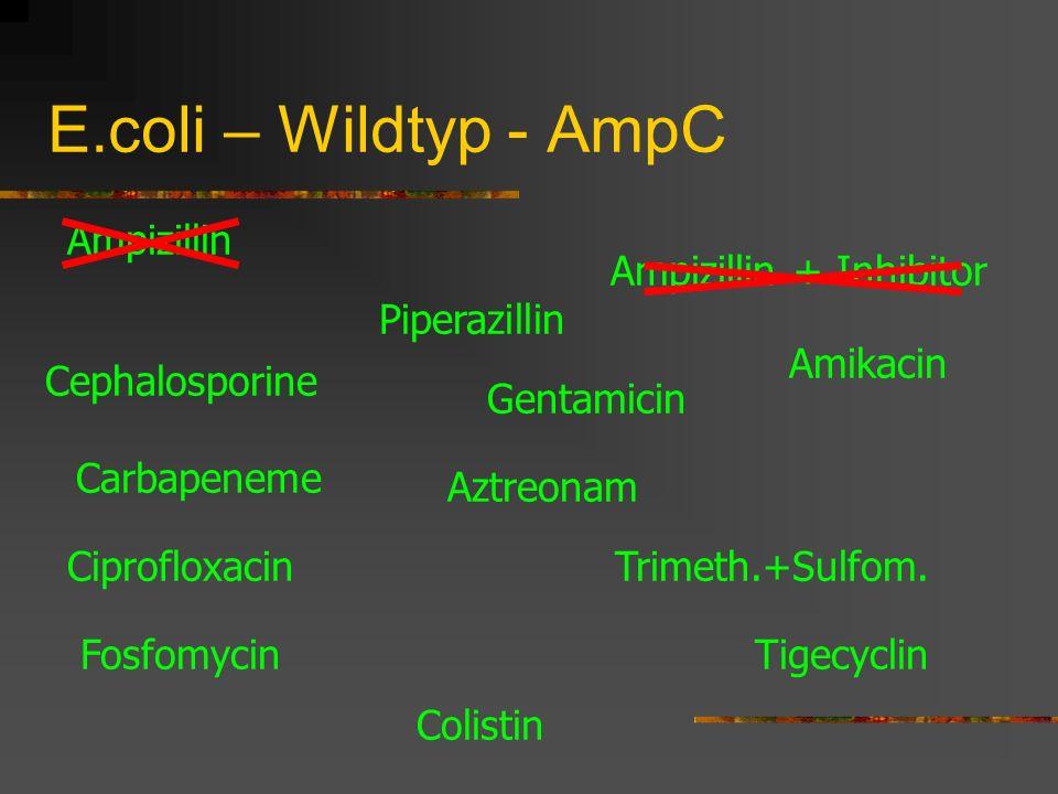 E.coli – Wildtyp - AmpC Ampizillin Cephalosporine Carbapeneme Piperazillin Amikacin Gentamicin Trimeth.+Sulfom. Tigecyclin Ampizillin + Inhibitor Cipr