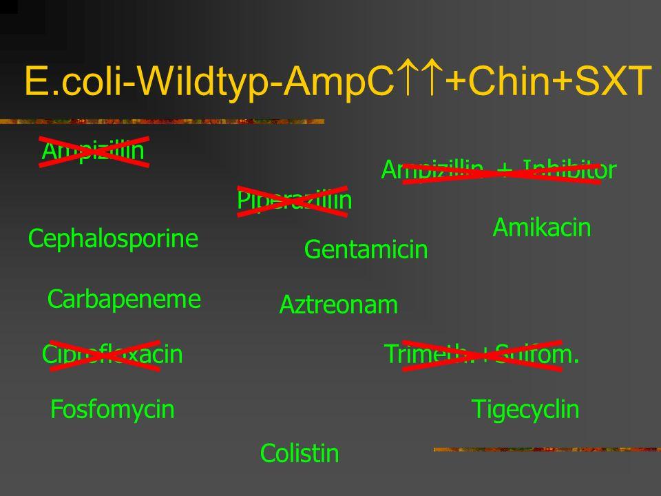 E.coli-Wildtyp-AmpC +Chin+SXT Ampizillin Cephalosporine Carbapeneme Piperazillin Amikacin Gentamicin Trimeth.+Sulfom. Tigecyclin Ampizillin + Inhibito