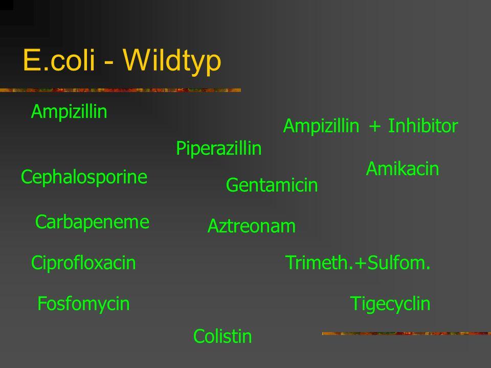 E.coli - Wildtyp Ampizillin Cephalosporine Carbapeneme Piperazillin Amikacin Gentamicin Trimeth.+Sulfom. Tigecyclin Ampizillin + Inhibitor Ciprofloxac