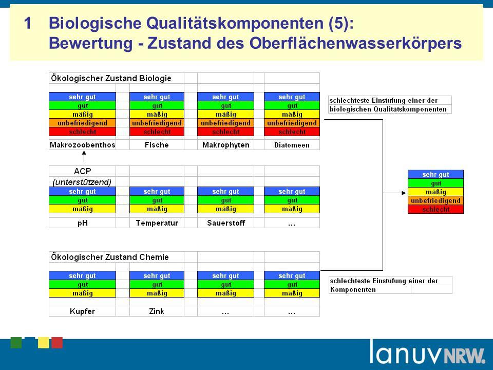 1 Biologische Qualitätskomponenten (5): Bewertung - Zustand des Oberflächenwasserkörpers