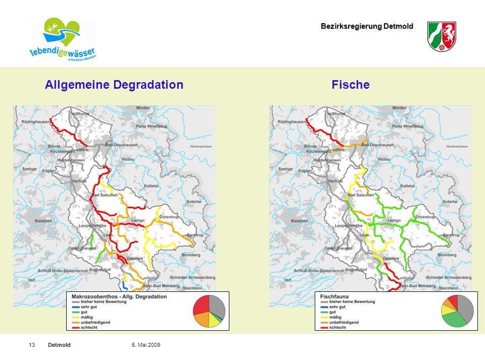 Bezirksregierung Detmold Detmold135. Mai 2009 Allgemeine DegradationFische