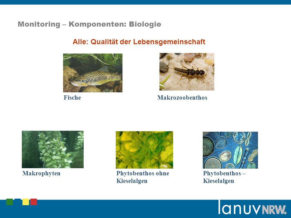 Monitoring – Komponenten: Biologie Fische Makrozoobenthos Makrophyten Phytobenthos ohne Kieselalgen Phytobenthos – Kieselalgen Alle: Qualität der Lebensgemeinschaft