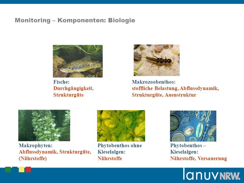 Monitoring – Komponenten: Biologie Fische: Durchgängigkeit, Strukturgüte Makrozoobenthos: stoffliche Belastung, Abflussdynamik, Strukturgüte, Auenstruktur Makrophyten: Abflussdynamik, Strukturgüte, (Nährstoffe) Phytobenthos ohne Kieselalgen: Nährstoffe Phytobenthos – Kieselalgen: Nährstoffe, Versauerung