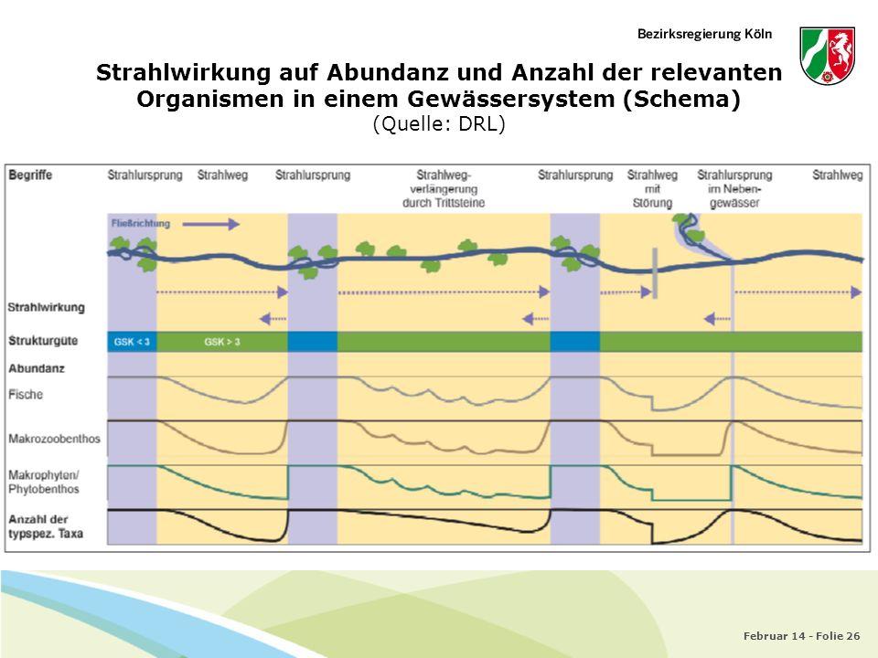 Februar 14 - Folie 26 Strahlwirkung auf Abundanz und Anzahl der relevanten Organismen in einem Gewässersystem (Schema) (Quelle: DRL)