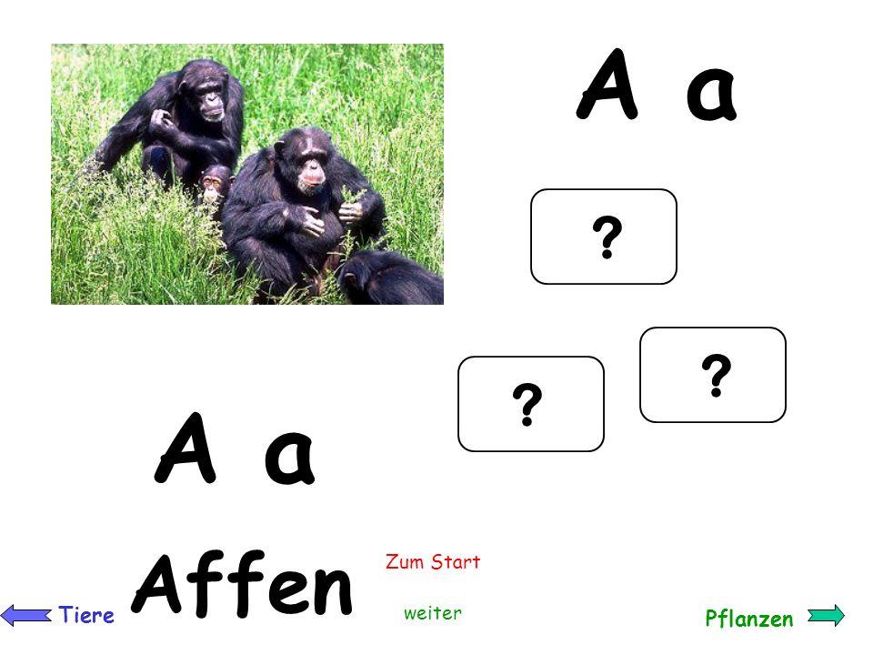 So geht`s: F TierePflanzen Zum Start Viel Spaß Klicke auf der Startseite auf einen Buchstaben z.B. Damit kommst du zur F-Seite mit der Forelle. Von do