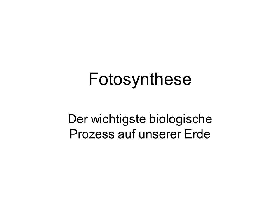 Fotosynthese Der wichtigste biologische Prozess auf unserer Erde