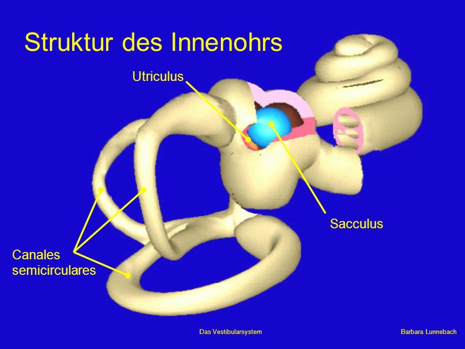 Barbara LunnebachDas Vestibularsystem 4 Ampulle 1 Sacculus 2 Utriculus 3 Ductus semicirculares