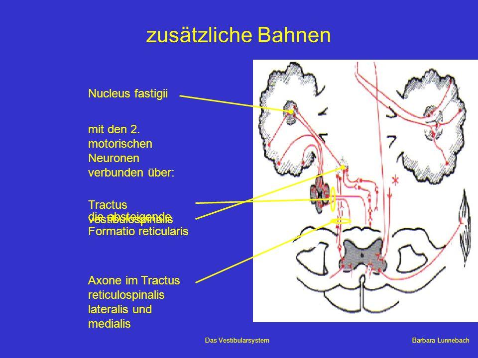 Barbara LunnebachDas Vestibularsystem zusätzliche Bahnen mit den 2. motorischen Neuronen verbunden über: Nucleus fastigii Tractus vestibulospinalis di