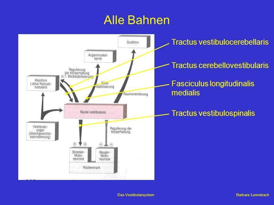 Barbara LunnebachDas Vestibularsystem Alle Bahnen Tractus vestibulocerebellaris Tractus cerebellovestibularis Tractus vestibulospinalis Fasciculus lon