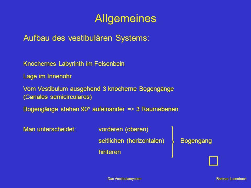 Barbara LunnebachDas Vestibularsystem Vestibulocerebelläre Verbindungen Tractus vestibulocerebellaris (afferent) Tractus cerebellovestibularis (efferent) Im Pedunkulus cerebellaris inferior verlaufen: