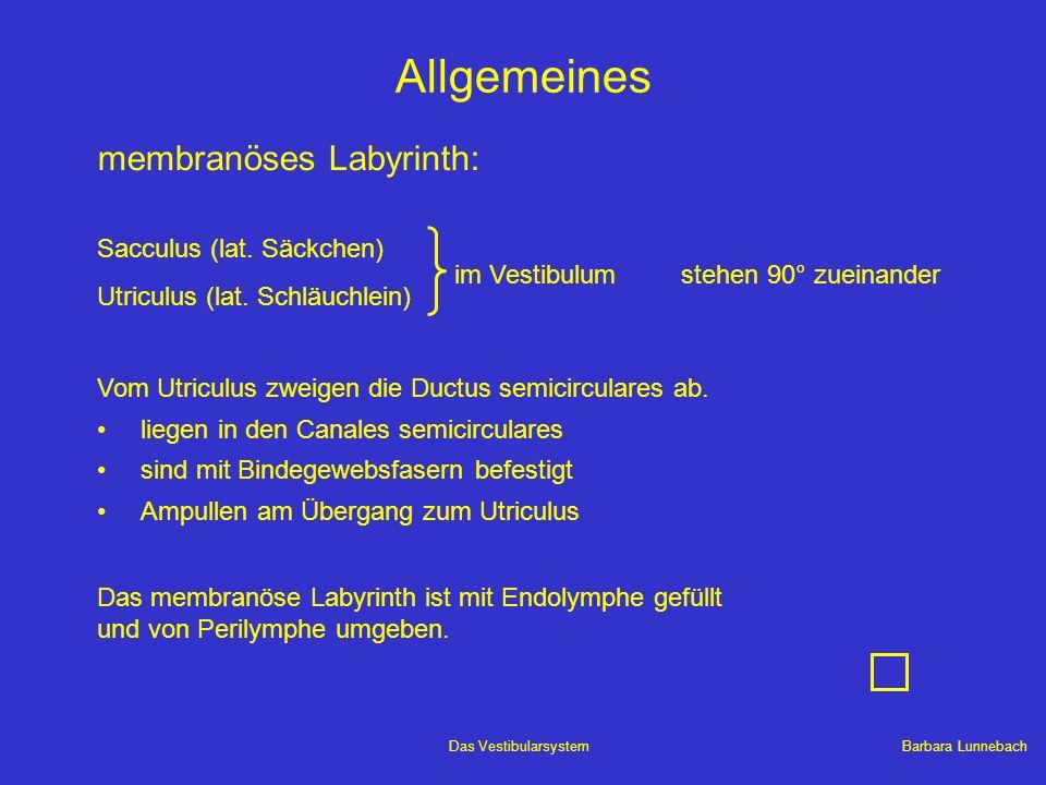 Barbara LunnebachDas Vestibularsystem Allgemeines System nach hinten oben geklappt èoffener Winkel von 30° zwischen horizontalem Bogengang und Horizontalebene Kopf beim Gehen leicht nach vorne geneigt ègesamtes Labyrinth in optimaler Arbeitsebene