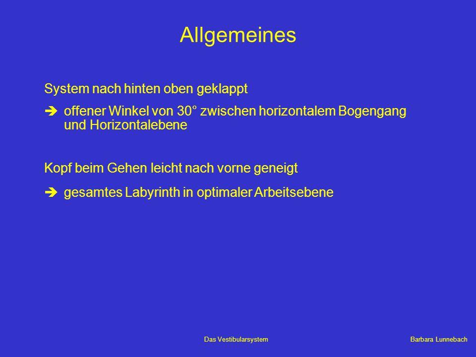 Barbara LunnebachDas Vestibularsystem Allgemeines System nach hinten oben geklappt èoffener Winkel von 30° zwischen horizontalem Bogengang und Horizon