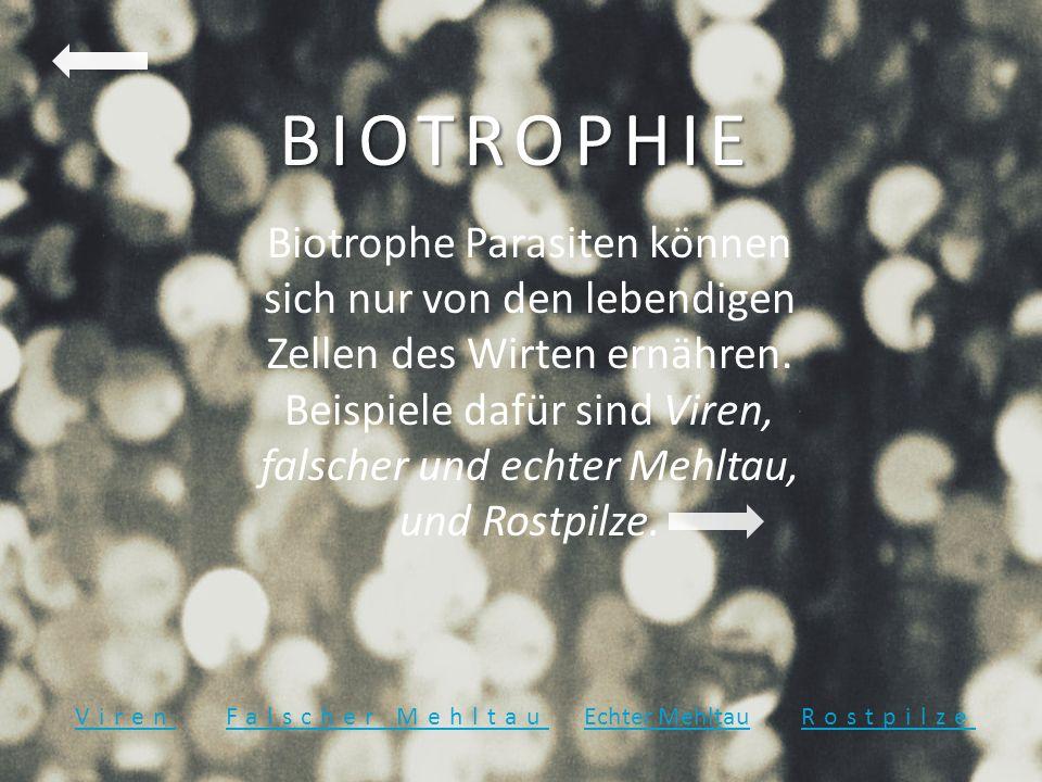 BIOTROPHIE Biotrophe Parasiten können sich nur von den lebendigen Zellen des Wirten ernähren. Beispiele dafür sind Viren, falscher und echter Mehltau,