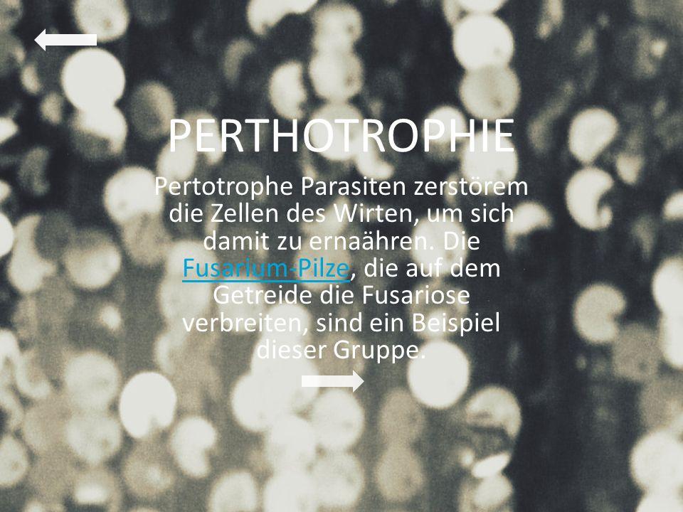 PERTHOTROPHIE Pertotrophe Parasiten zerstörem die Zellen des Wirten, um sich damit zu ernaähren. Die Fusarium-Pilze, die auf dem Getreide die Fusarios