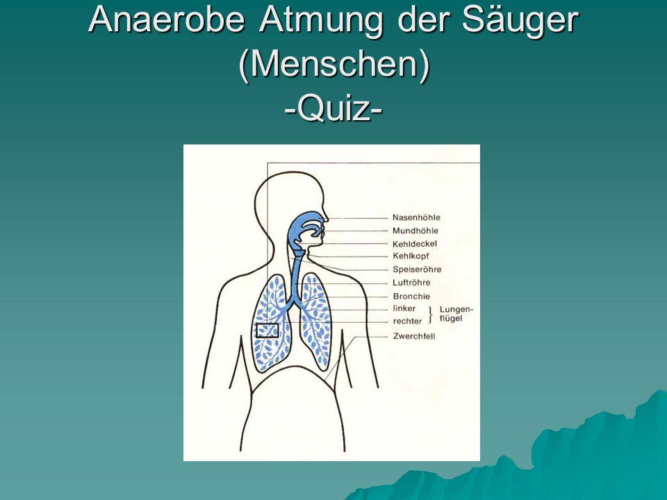 Um die Lungen herum is die Brustfell gebildet aus… A – Lungenfell A – Lungenfell B – Rippenfell B – Rippenfell C – Lungen- und Rippenfell C – Lungen- und Rippenfell D – Zwerchfell D – Zwerchfell