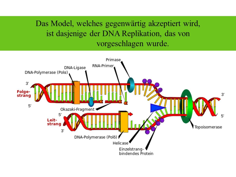 Bei der autokatalytischen Funktion der DNA, werden mehrere Enzyme aktiv: Exonukleose Topoisomerase Helicase Primase Polymerasen Ligase