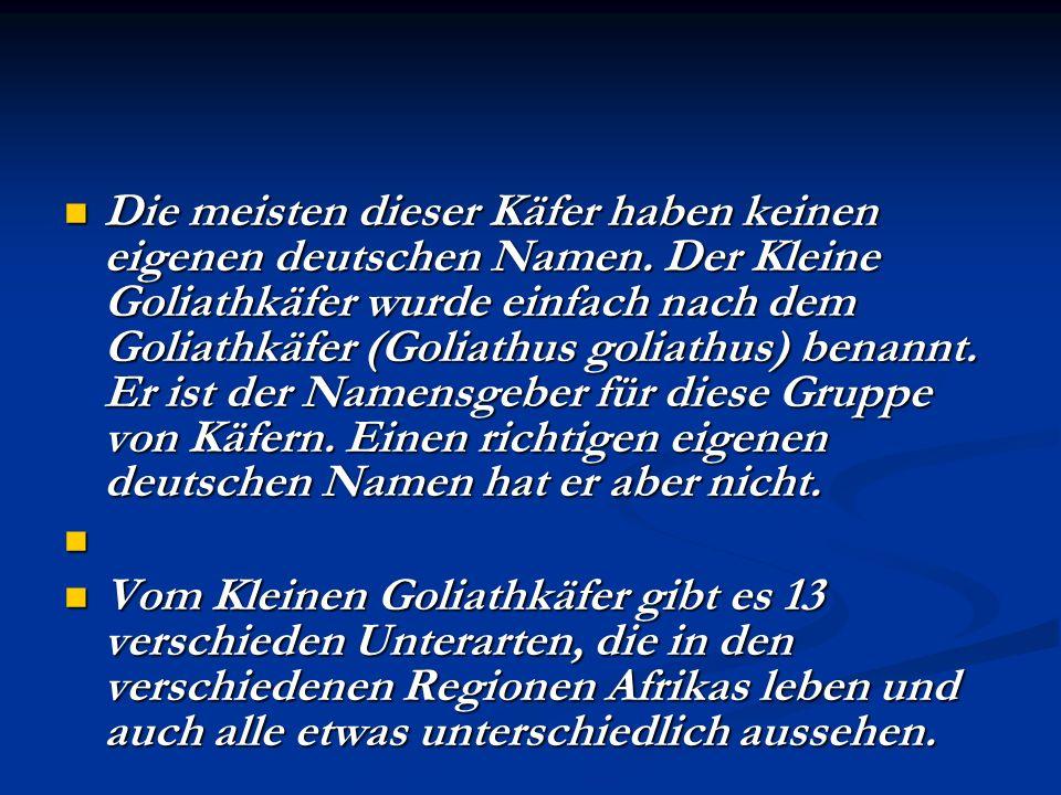 Die meisten dieser Käfer haben keinen eigenen deutschen Namen. Der Kleine Goliathkäfer wurde einfach nach dem Goliathkäfer (Goliathus goliathus) benan