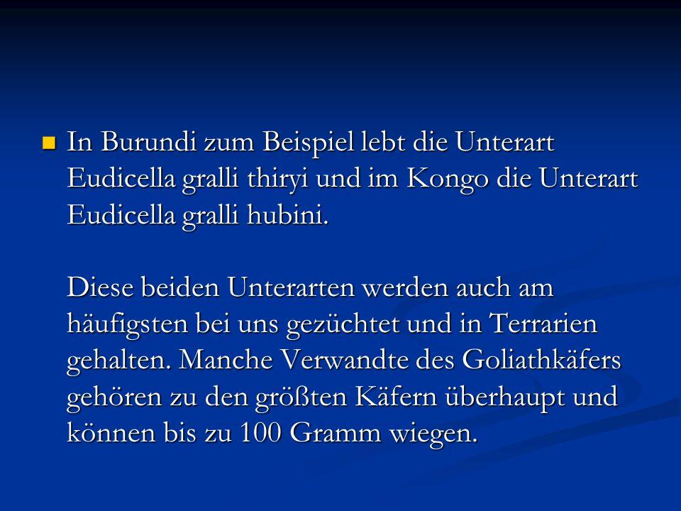 In Burundi zum Beispiel lebt die Unterart Eudicella gralli thiryi und im Kongo die Unterart Eudicella gralli hubini. Diese beiden Unterarten werden au