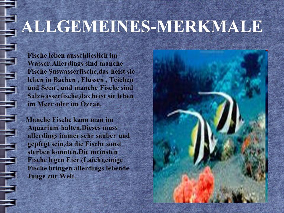 ALLGEMEINES-MERKMALE Fische leben ausschlieslich im Wasser.Allerdings sind manche Fische Suswasserfische,das heist sie leben in Bachen, Flussen, Teichen und Seen, und manche Fische sind Salzwasserfische,das heist sie leben im Meer oder im Ozean.