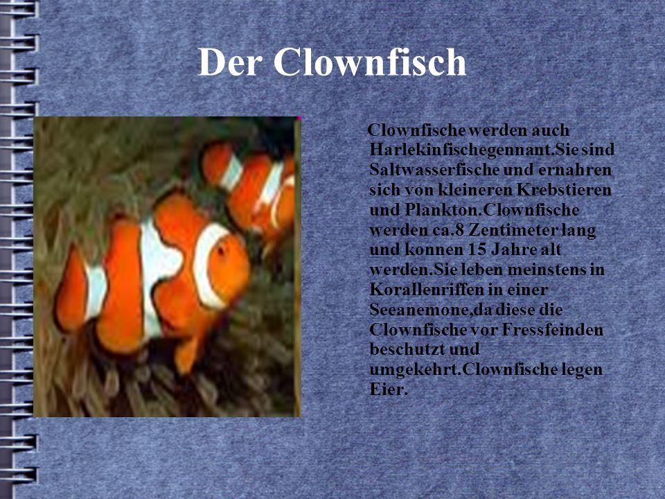 Der Clownfisch Clownfische werden auch Harlekinfischegennant.Sie sind Saltwasserfische und ernahren sich von kleineren Krebstieren und Plankton.Clownfische werden ca.8 Zentimeter lang und konnen 15 Jahre alt werden.Sie leben meinstens in Korallenriffen in einer Seeanemone,da diese die Clownfische vor Fressfeinden beschutzt und umgekehrt.Clownfische legen Eier.