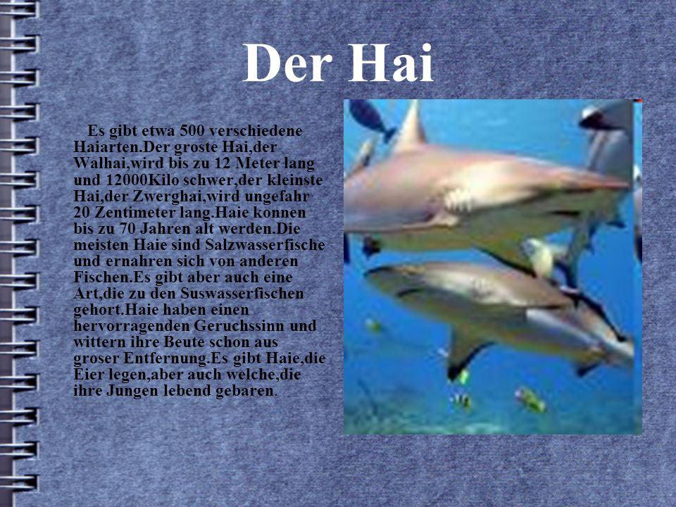 Der Hai Es gibt etwa 500 verschiedene Haiarten.Der groste Hai,der Walhai,wird bis zu 12 Meter lang und 12000Kilo schwer,der kleinste Hai,der Zwerghai,wird ungefahr 20 Zentimeter lang.Haie konnen bis zu 70 Jahren alt werden.Die meisten Haie sind Salzwasserfische und ernahren sich von anderen Fischen.Es gibt aber auch eine Art,die zu den Suswasserfischen gehort.Haie haben einen hervorragenden Geruchssinn und wittern ihre Beute schon aus groser Entfernung.Es gibt Haie,die Eier legen,aber auch welche,die ihre Jungen lebend gebaren.