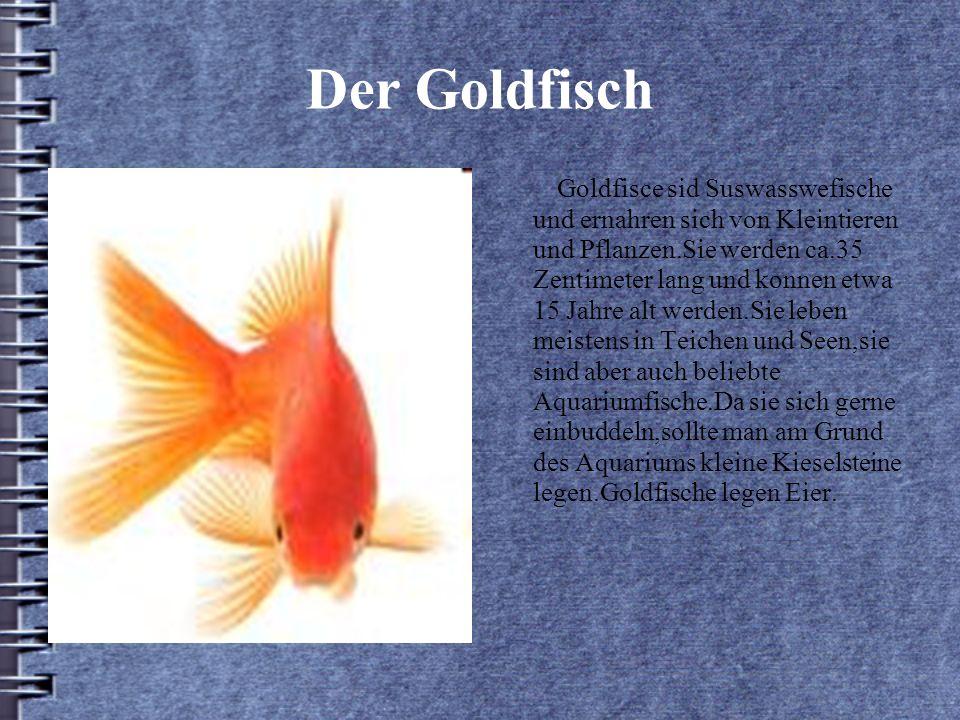 Der Goldfisch Goldfisce sid Suswasswefische und ernahren sich von Kleintieren und Pflanzen.Sie werden ca.35 Zentimeter lang und konnen etwa 15 Jahre alt werden.Sie leben meistens in Teichen und Seen,sie sind aber auch beliebte Aquariumfische.Da sie sich gerne einbuddeln,sollte man am Grund des Aquariums kleine Kieselsteine legen.Goldfische legen Eier.