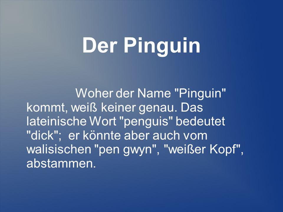 Der Pinguin Woher der Name Pinguin kommt, weiß keiner genau.