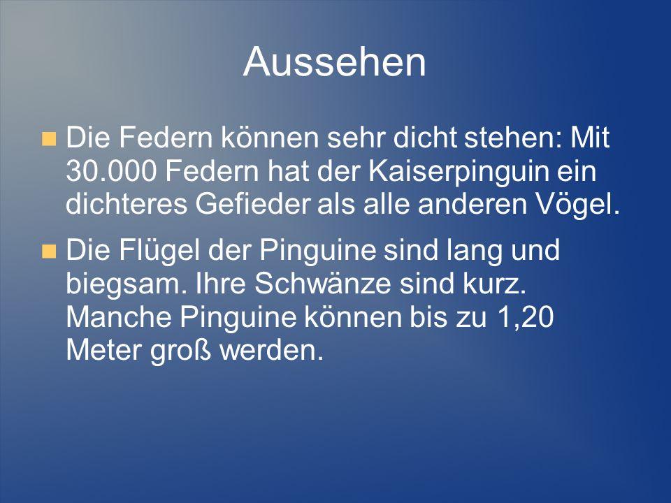 Aussehen Die Federn können sehr dicht stehen: Mit 30.000 Federn hat der Kaiserpinguin ein dichteres Gefieder als alle anderen Vögel.