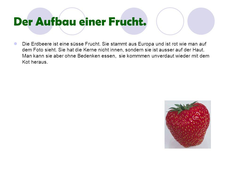 Der Aufbau einer Frucht. Die Erdbeere ist eine süsse Frucht. Sie stammt aus Europa und ist rot wie man auf dem Foto sieht. Sie hat die Kerne nicht inn