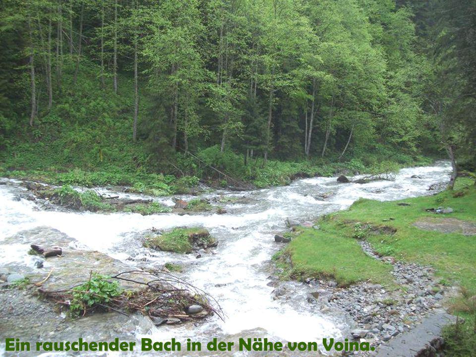 Ein rauschender Bach in der Nähe von Voina.